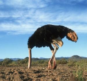 Stuisvogel
